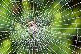Rosée sur toile d'araignée